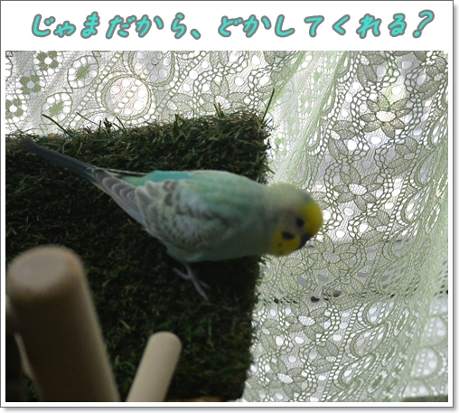 バルーンアート 003-3きびしいディジー