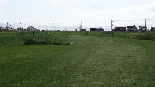 稚内PG遠征2015 ノシャップ岬PG (4)