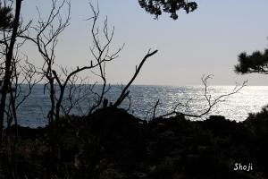 城ケ島海岸で
