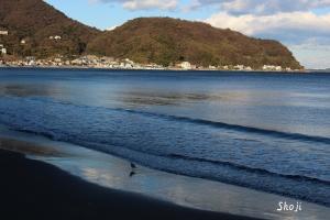 宇佐美海岸の冬鳥
