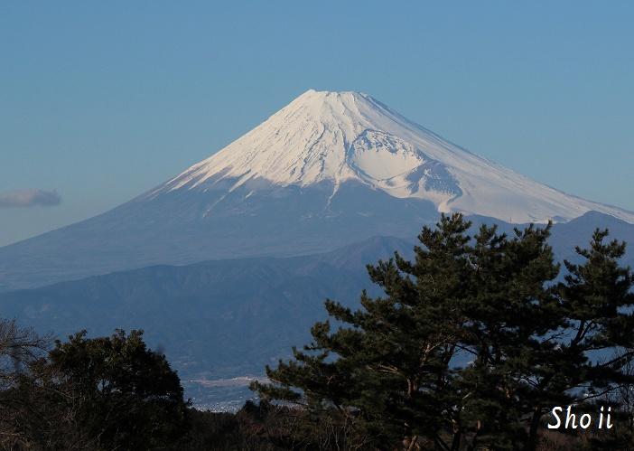 達磨山からの富士山と松
