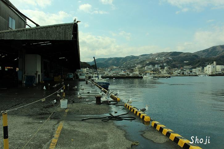 伊東港の魚市場から