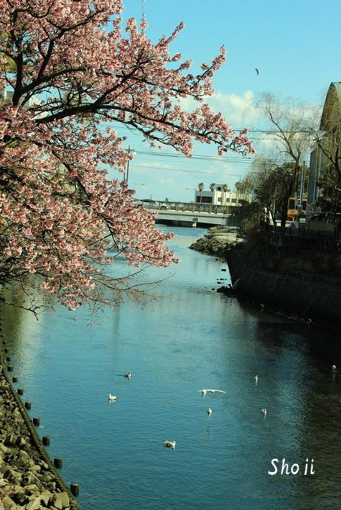 伊東温泉はもう春