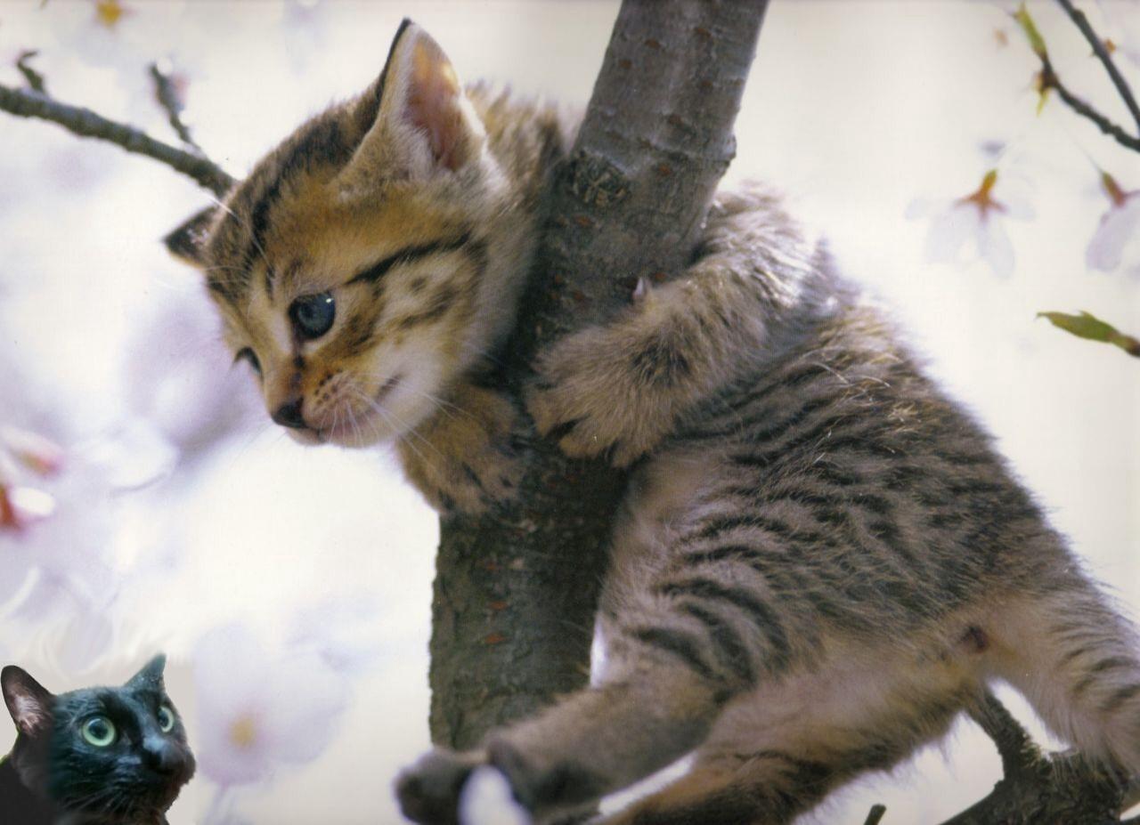 ⑪猫cat⑦⑧⑨⑩⑪