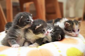 子猫5匹を生き埋めにした高校教師尾高信行船橋市千葉県立薬園台高校