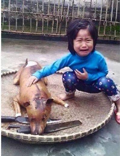 ベトナムの5歳少女 行方不明だった愛犬を犬肉店で見つけて号泣