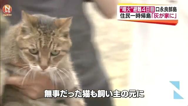 ①口永良部島に取り残された猫