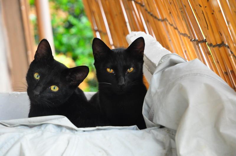 口永良部島の民宿のネコ