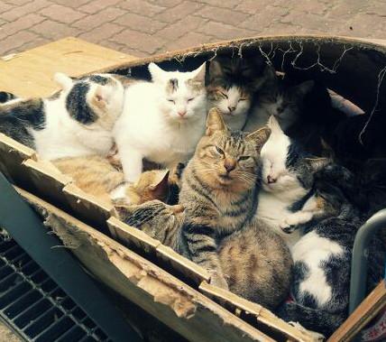 ④【韓国釜山】野良猫600匹を沸騰したお湯に入れて殺害し健康食品店に販売