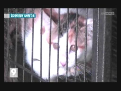 ②⑬【韓国釜山】野良猫600数匹をゆで猫にして食べる