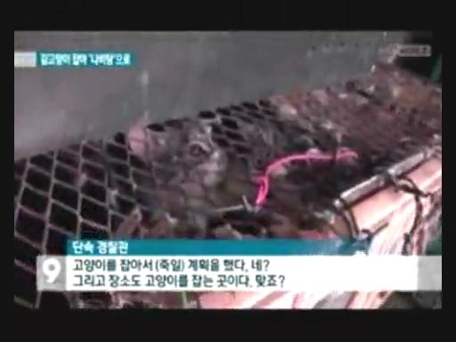 ③①【韓国釜山】野良猫600数匹をゆで猫にして食べる