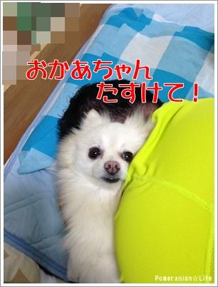 04_20150323232148707.jpg