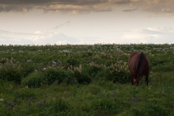 霧多布岬夕暮れの馬