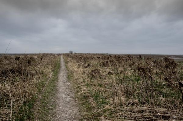 野付トドワラ行く道
