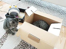 猫と箱20150707