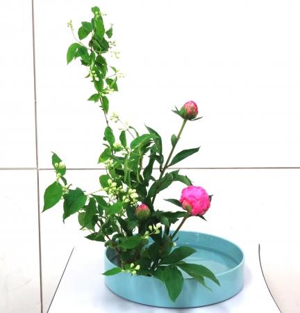 DSC01549-盛り花150518