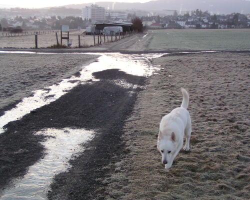 2009-01-24.jpg