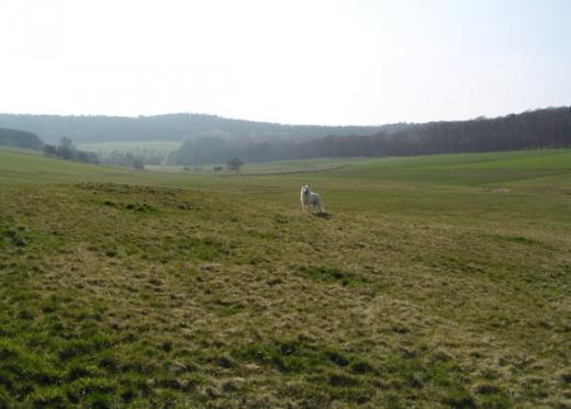 2009-04-03b.jpeg
