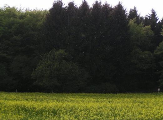 2009-04-26c.jpeg