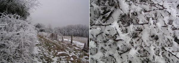 2010-01-23a.jpeg