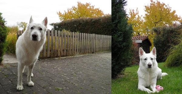 2010-10-30a.jpeg