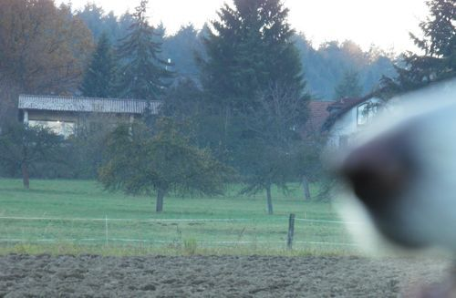 2011-11-23b.jpeg