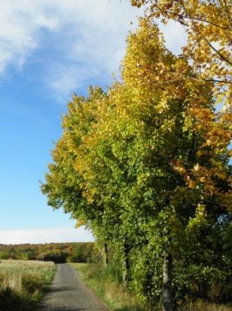 2012-10-17a.jpeg