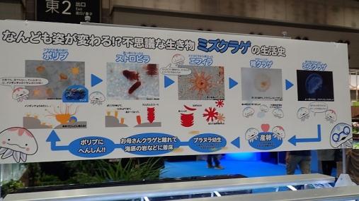 ジャパンペットフェア2015 04-02 (107)
