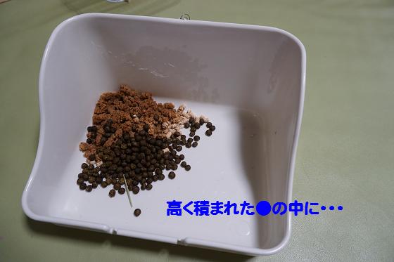 ぴょん子150706_01