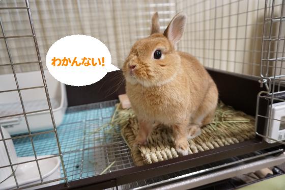 ぴょん子150706_05