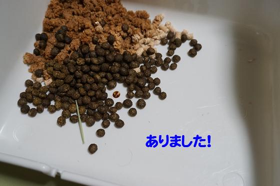 ぴょん子150706_02