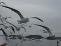 oceanarrow03.jpg