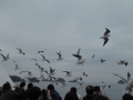 oceanarrow05.jpg