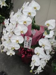 【新店】麺処 きなり-11