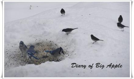 雪の日もお食事に