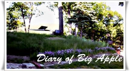 NY,我が家の裏庭