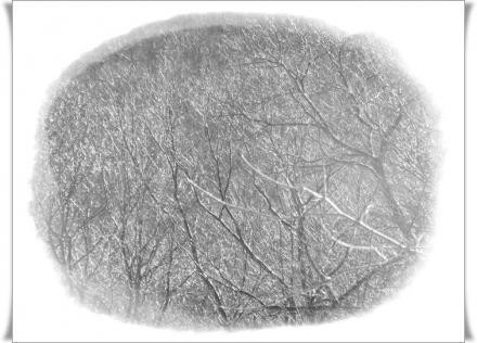 1月13日霧氷
