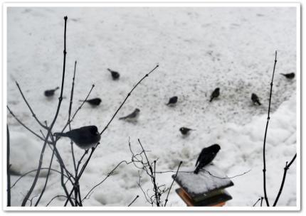 未だ雪の中