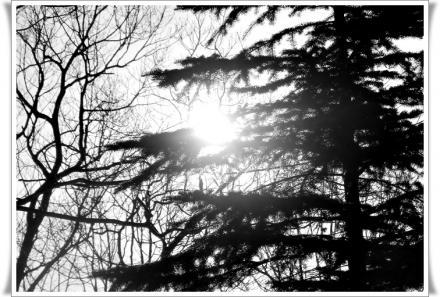 十五夜の翌日の朝陽