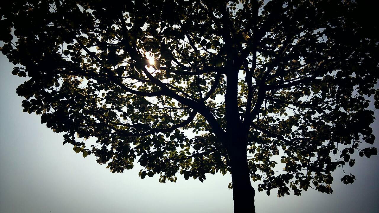 reftreespring.jpg