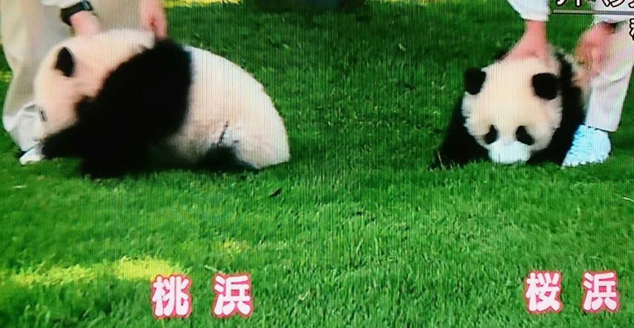 双子のパンダ②