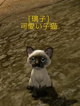 2月4日可愛い子猫