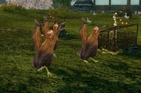 4月4日畑の鶏