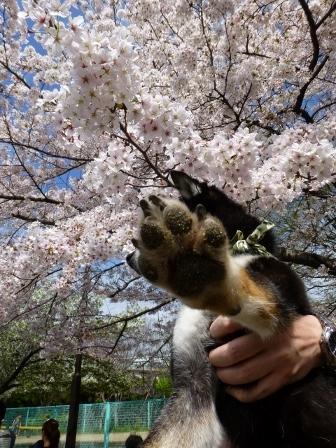 お花見~元茨木川緑地~39