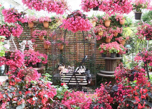 秘密の花園風