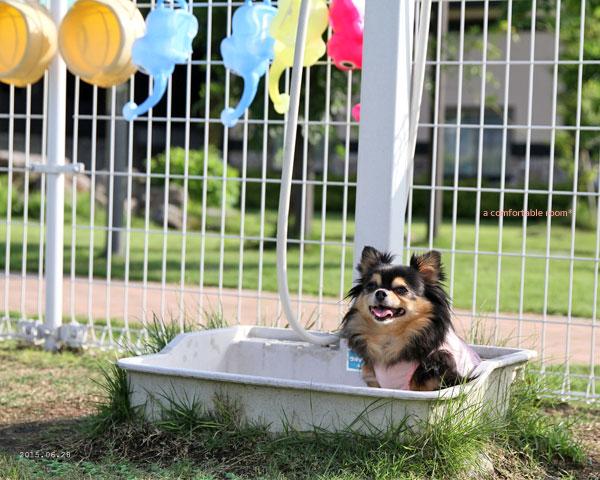 ラーたん入浴中