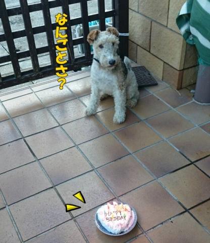 ルイの誕生日2015①