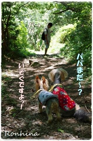 幕山公園④
