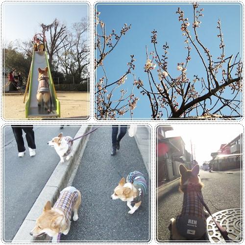3さんでお散歩☆