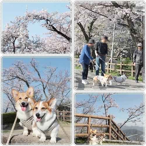 お花見散歩2☆